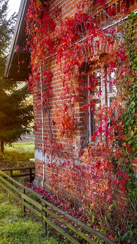 jesień w ośrodku