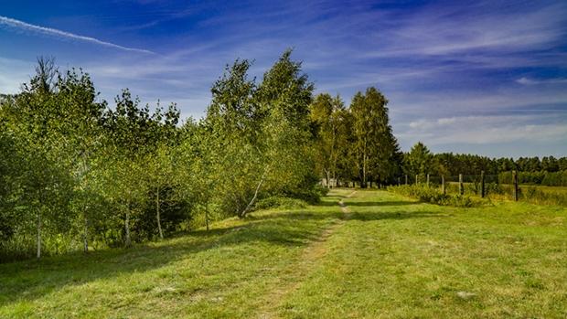 Ścieżka do ogrodu